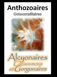 Anthozoaires - Octocoralliaires