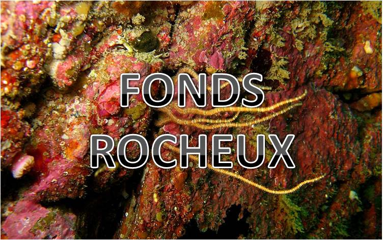 Bouton Fonds rocheux