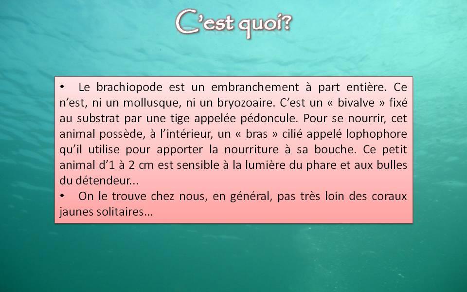 Brachiopodes En texte...