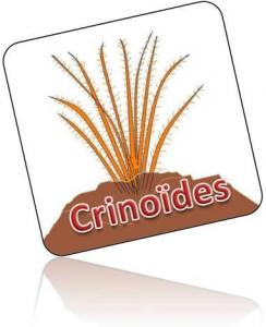 Crinodes