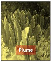 Forme plume