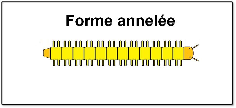 Forme annelée