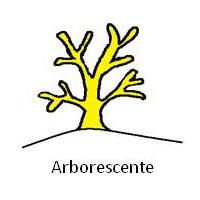 Arborescente