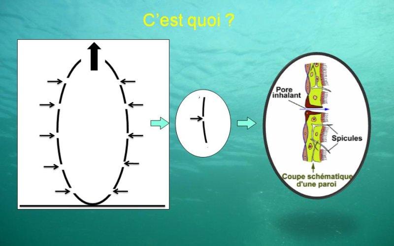 Outre // Détail structure éponge