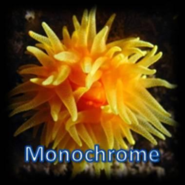 Cnidaire monochrome