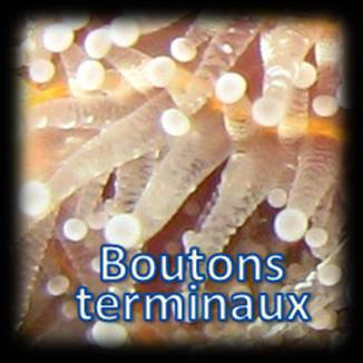 Boutons terminaux